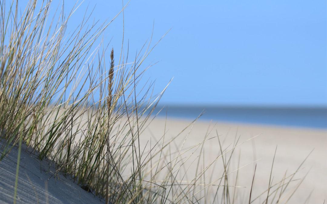 Zennn in de duinen